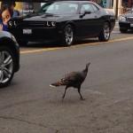 city turkey